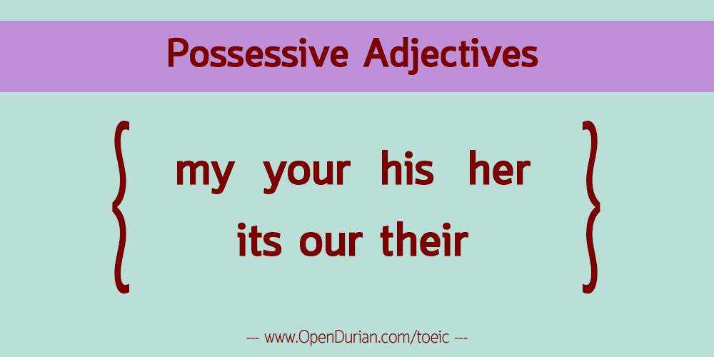 Possessive Adjective: my your his her its our their